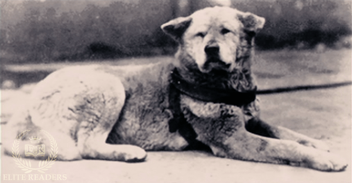 Anjing Hachiko Jepang