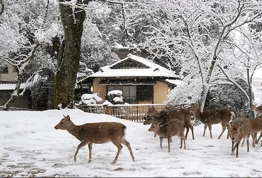 Paket wisata kota nara musim dingin
