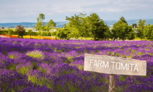 Farm Tomita Hokkaido