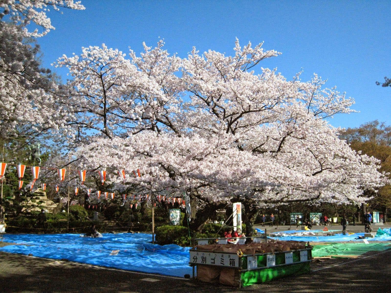 Ueno Park Perpaduan Antara Taman, Seni, dan Budaya Khas Jepang
