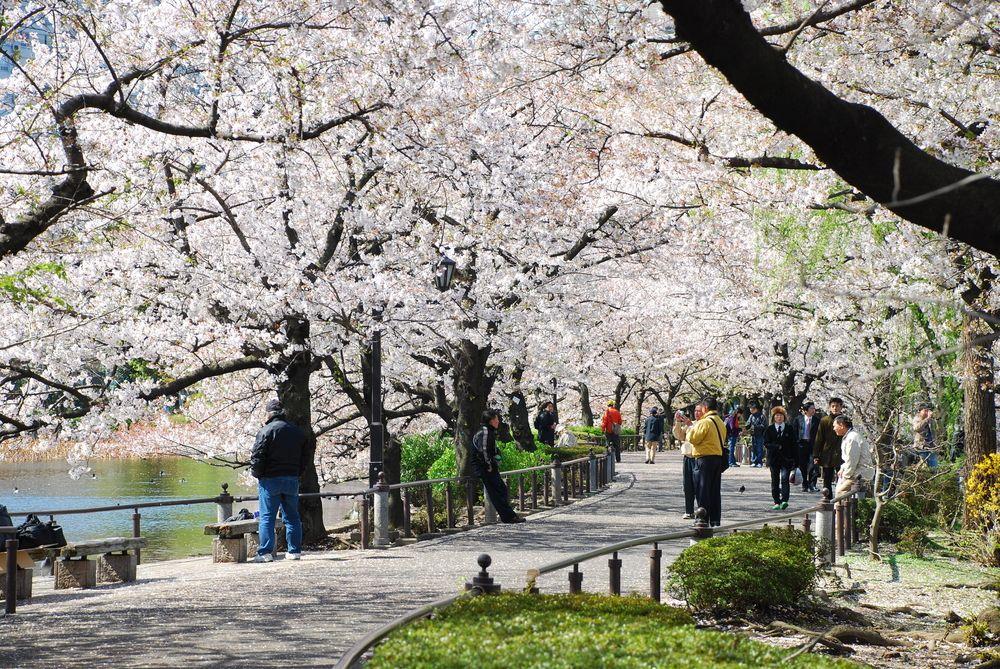Ueno Park in Spring
