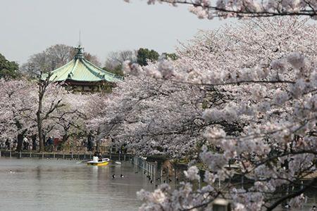 Ueno Sakura Matsuri