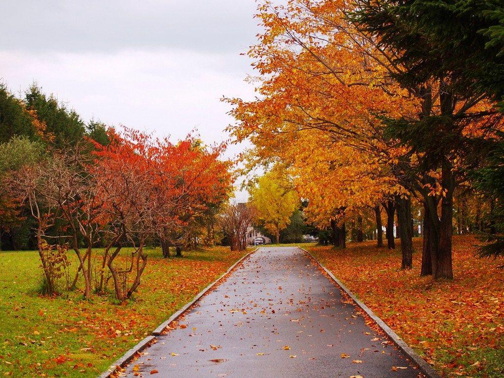 moerenuma park autumn