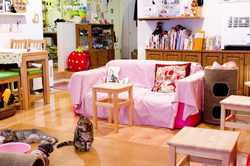 Cat Cafe Hapineko Shibuya