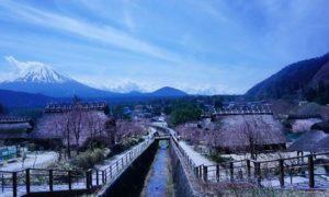 Iyashi No Sato Japan, Desa Wisata di Kaki Gunung Fuji
