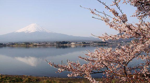 Kawaguchiko Lake Spring