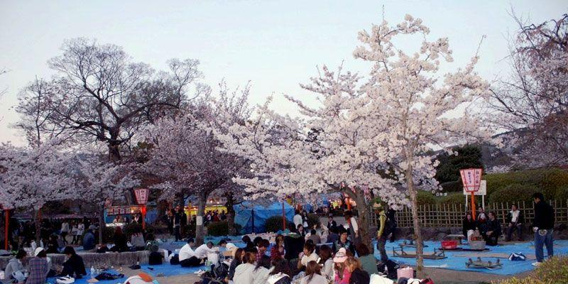 Maruyama Park Spring