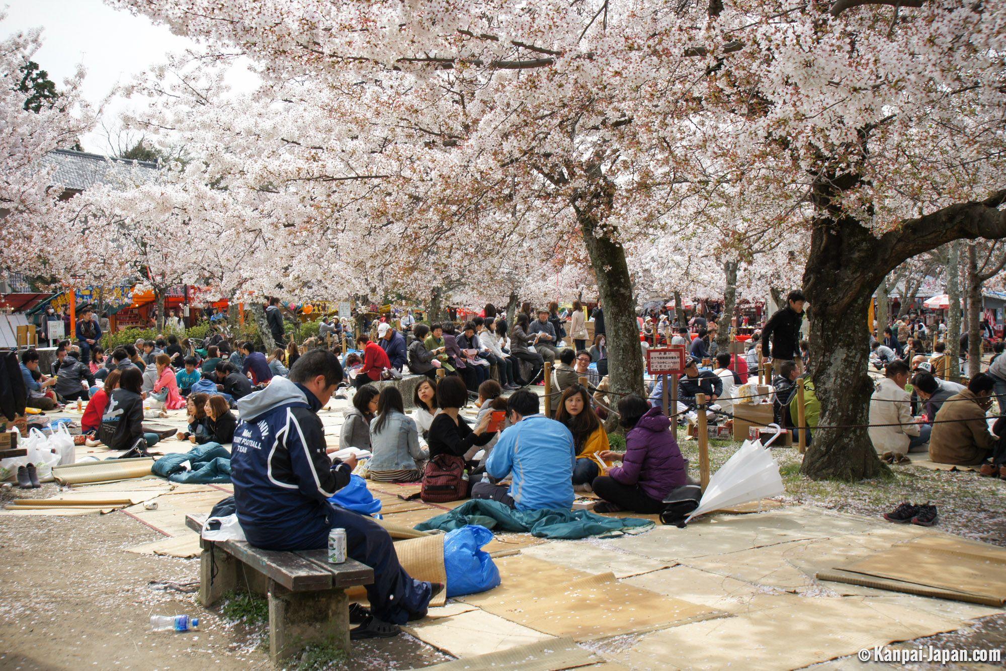 Maruyama Park Tempat Hanami Terbaik
