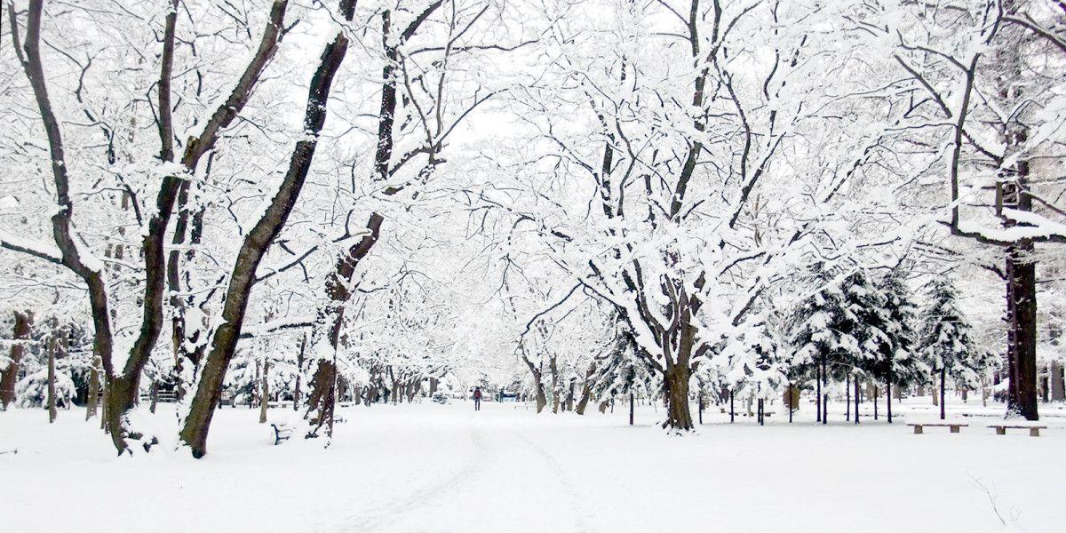 Maruyama Park Winter