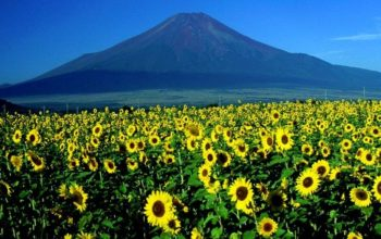 gunung fuji musim panas by www.jalan2kejepang.com