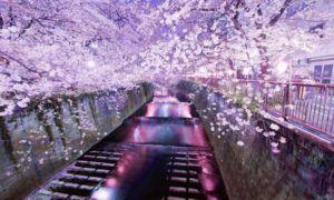Paket Tour Ke Jepang 4 Hari 3 Malam Mei Musim Semi (Spring) 2018
