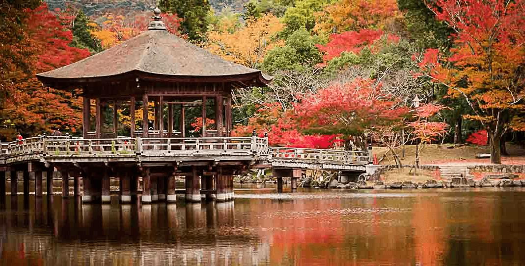 Sewa Mobil di Nara Jepang dan City Tour dengan Sopir