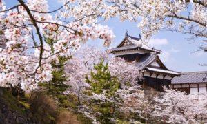 Paket Tour Ke Jepang 3 Hari 2 Malam April Musim Semi (Spring)