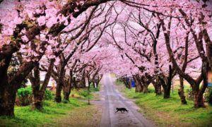 Paket Tour Ke Jepang 3 Hari 2 Malam Maret Musim Semi (Spring) 2019