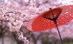 Paket Tour Ke Jepang 3 Hari 2 Malam Mei Musim Semi (Spring)