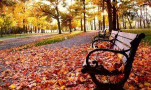 Paket Tour Ke Jepang 3 Hari 2 Malam November Musim Gugur (Autumn)