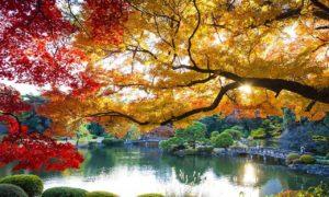 Paket Tour Ke Jepang 3 Hari 2 Malam September Musim Gugur (Autumn) 2018