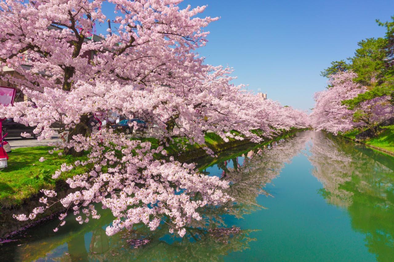 Paket Wisata Tour ke Jepang 6 Hari 5 Malam April Musim Semi (Spring) 2019