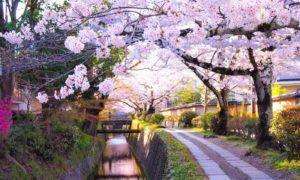 Paket Wisata Tour ke Jepang 6 Hari 5 Malam Maret Musim Semi (Spring) 2019