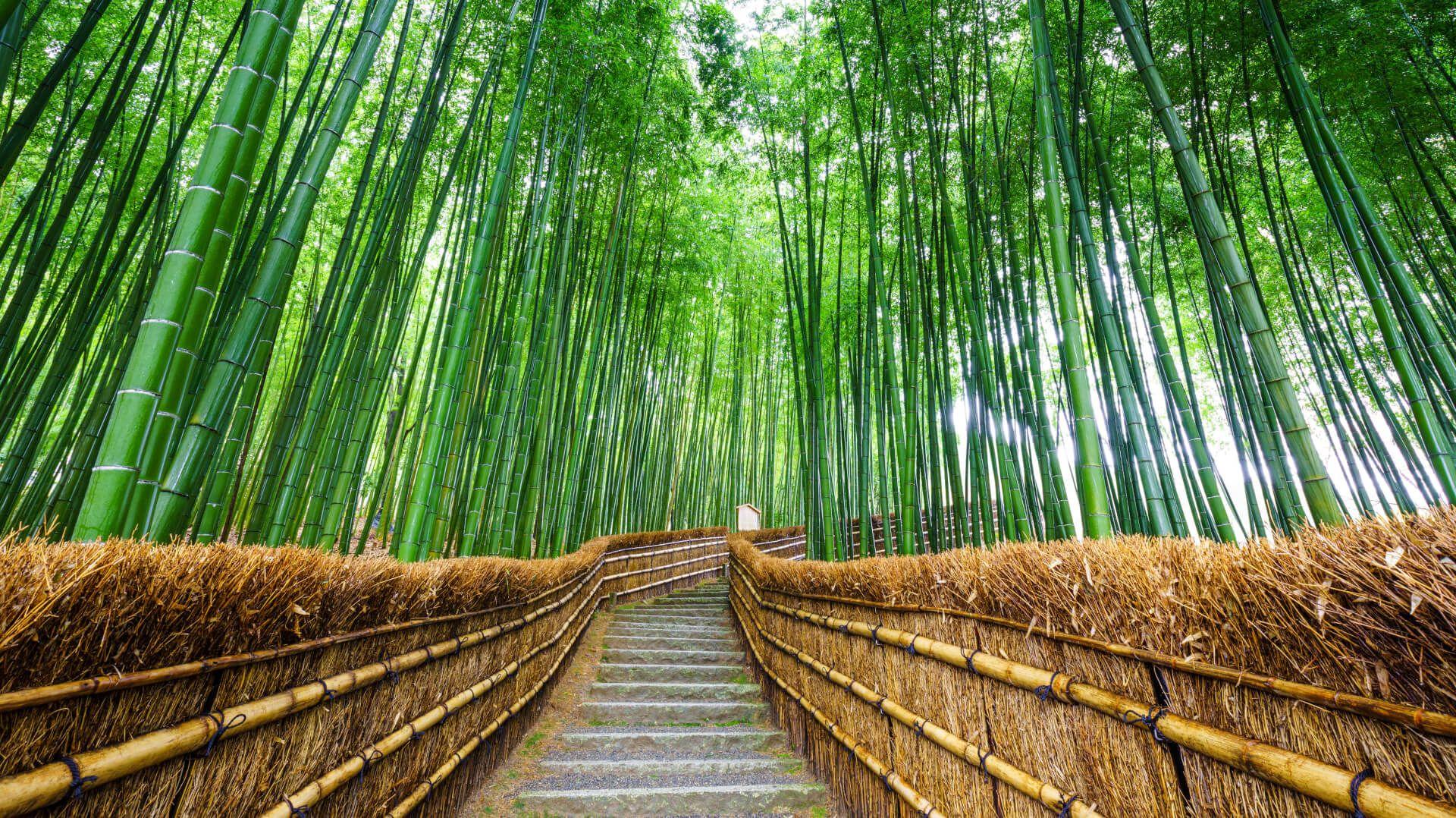Tentang Arashiyama