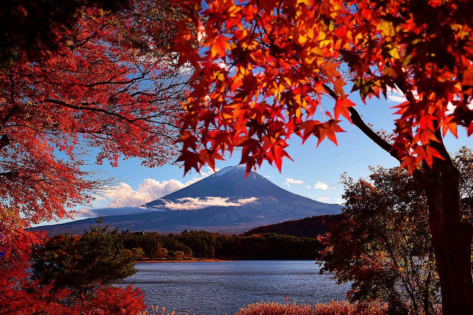 Kawaguchiko musim gugur