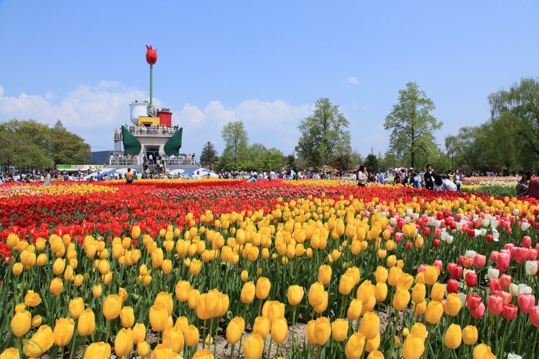 Tonami Tulip Fair di Jepang