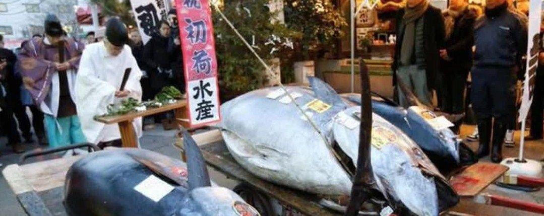 Informasi dan Kegitan di Pasar Tsukiji