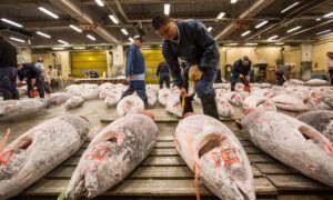 Tsukiji Fish Market Pindah ke Pasar Ikan Toyosu