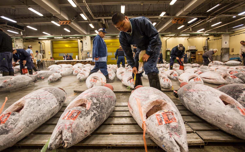 Tsukiji Fish Market Jepang, Wisata Pasar Ikan dan Kuliner di Tokyo ...