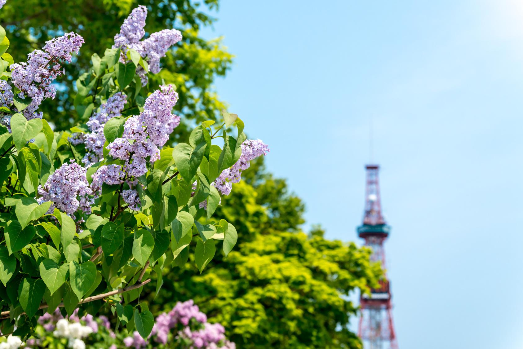 Paket Tour Ke Jepang 8 Hari 7 Malam Mei Musim Semi (Spring)